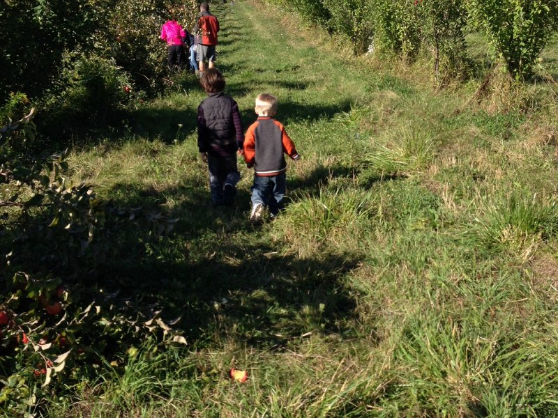 Apple picking offers fresh air, exercise and tasty treats.