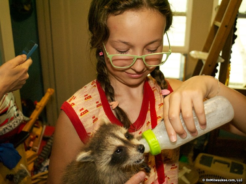 Raccoon formula. It's a thing.