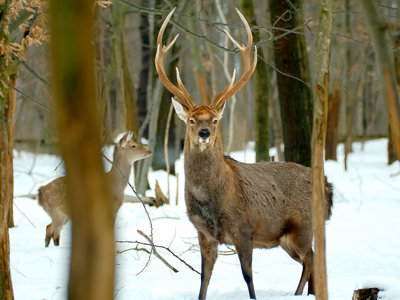 Rifle hunting expands throughout Wisconsin