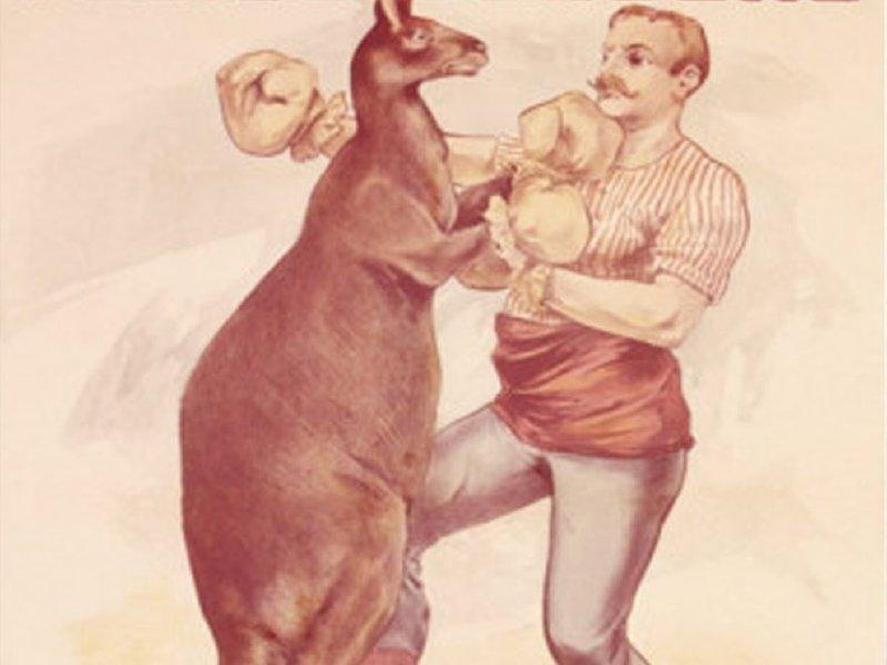 Red Kangaroo Boxing