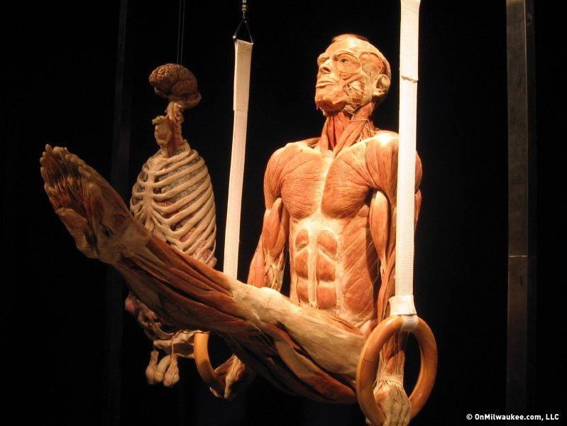 BODIES REVEALED is a limited time traveling exhibit now in Scottsdale, AZ. It lets visitors of all ages explore deep within the human body. This exhibition offers an intimate and informative view into the human body.