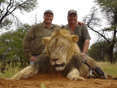 Does anyone actually think killing Cecil - or any lion - is a good thing?