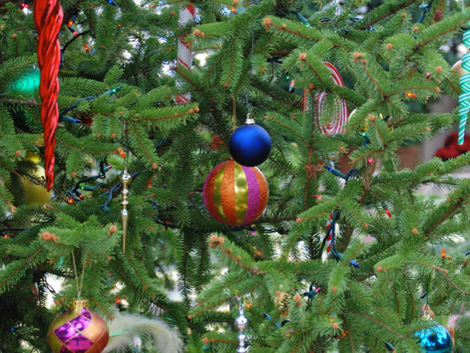 Selecting And Caring For Your Christmas Tree Onmilwaukee