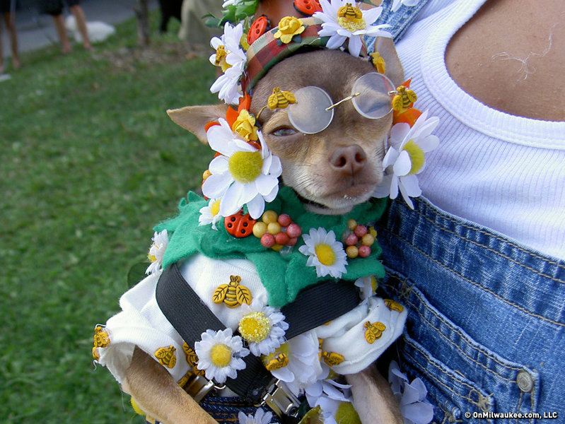 This tiny dog won best costume dressed as a flower garden. & Dogs look even cuter in Halloween costumes