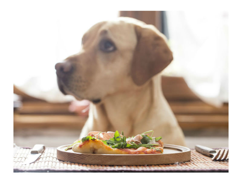 Looking For Pet Roved Bars And Restaurants Here S A Helpful Guide