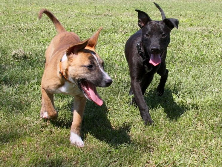 Image result for dogs in park