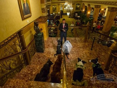 8 photos from a dog wedding at The Pfister