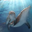 'Dolphin Tale 2': unnecessary sequel still makes a small, sweet splash Image