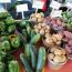 Pop-up Fondy Farmers Market lands at Schlitz Park Image