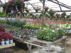 Milwaukee's independent garden centers  Image