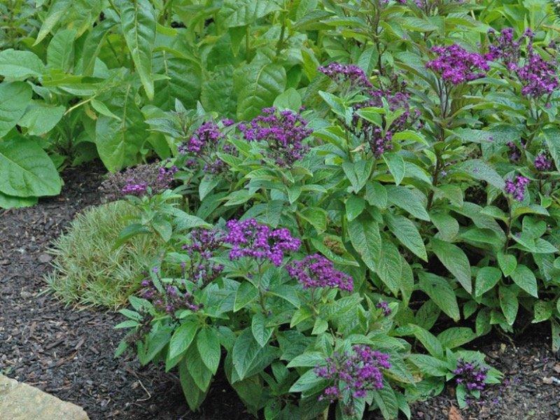 Garden your way to better health - OnMilwaukee