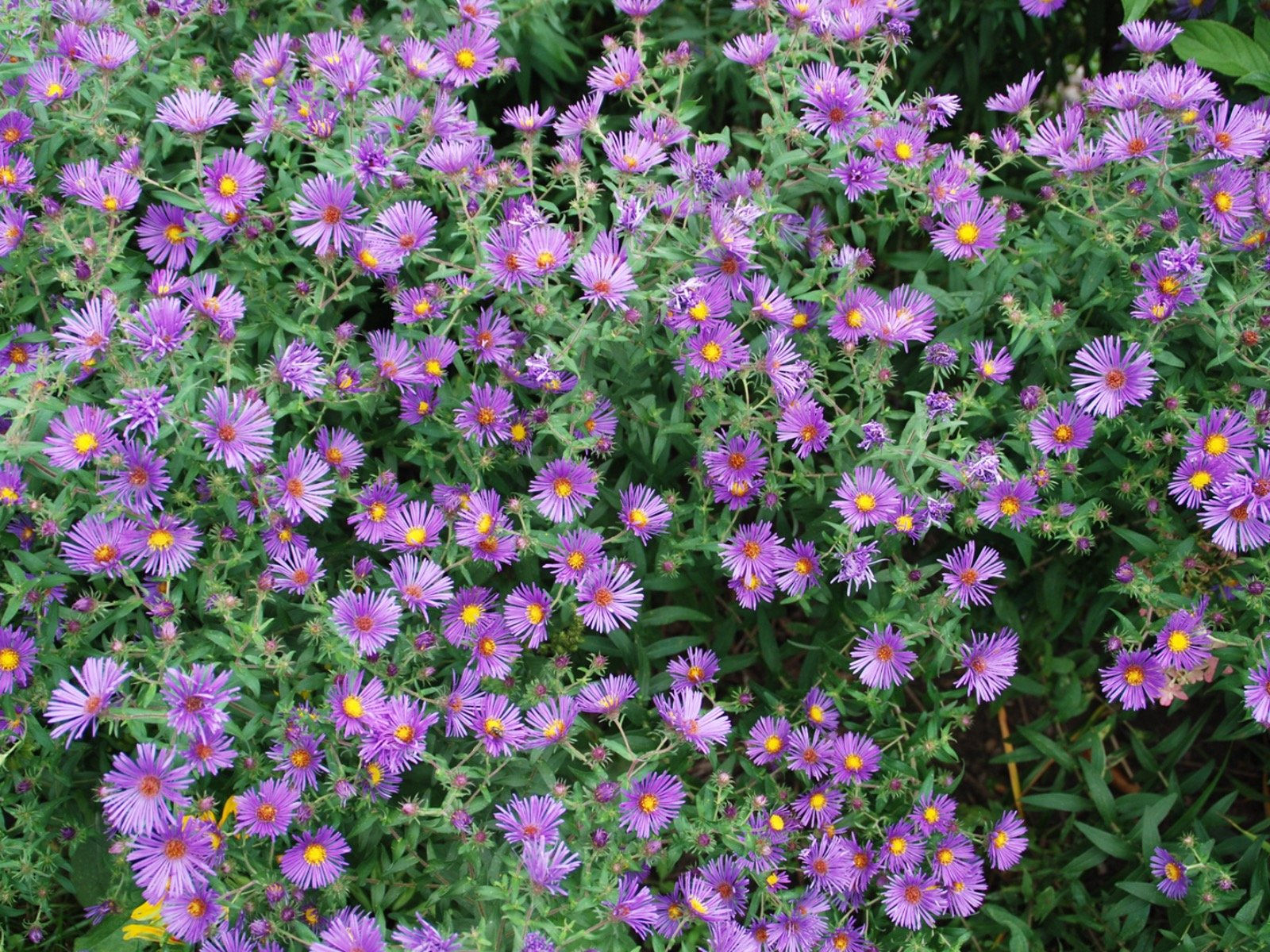 Revive Overcrowded And Struggling Perennials Onmilwaukee