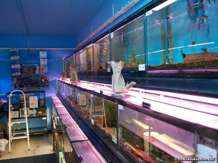Gary 39 s pet jungle celebrates 20 wild years onmilwaukee for Fish store milwaukee
