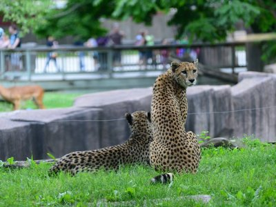 Green luminary: Milwaukee County Zoo