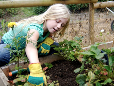 Tips for greening your yards and gardens Image
