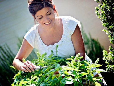 Harvesting, storing and preserving herbs from the garden Image