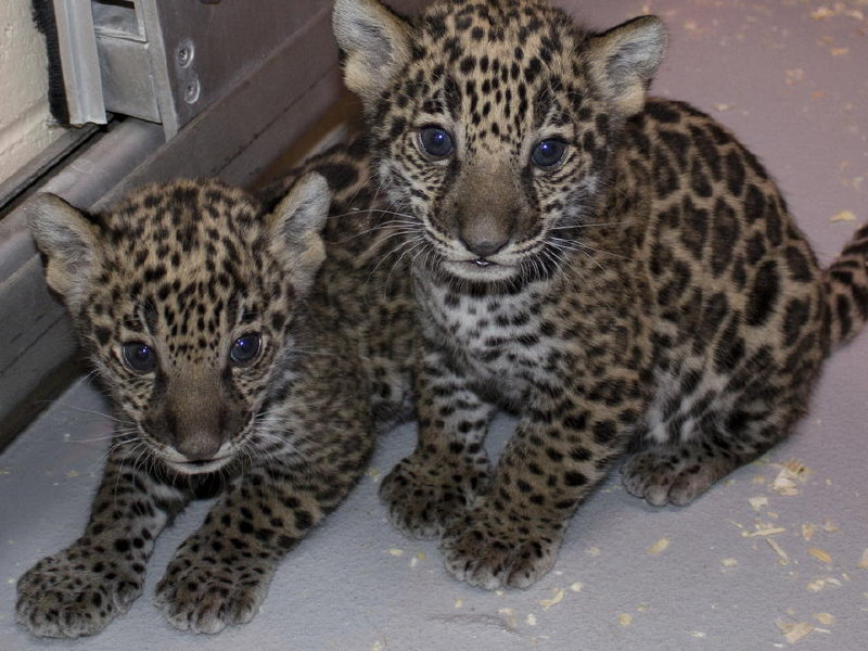 The Milwaukee County Zoo's newest residents.