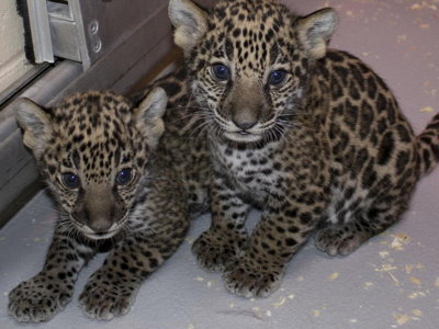 New zoo cubs Image