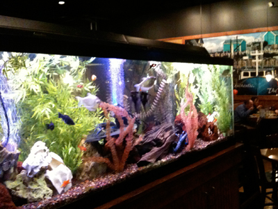 The fish tank at Joey's Seafood and Grill is a major draw for kids.