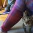 Na-meow-ste: Kitten yoga is a thing Image