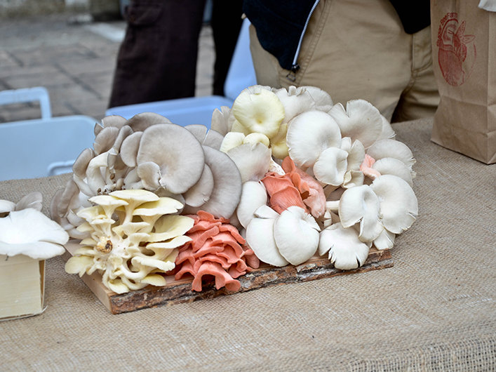 The market had a fine stock of oyster mushrooms.