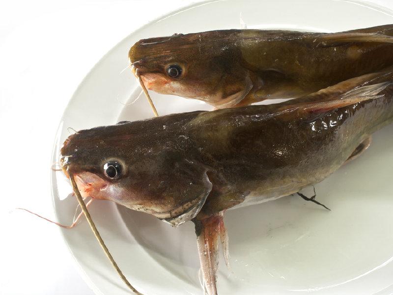 Mtv 39 s catfish in the public spotlight onmilwaukee for Cat fish mtv