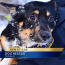 Milwaukee firefighters receive PETA award for rescuing dog from ice floe Image