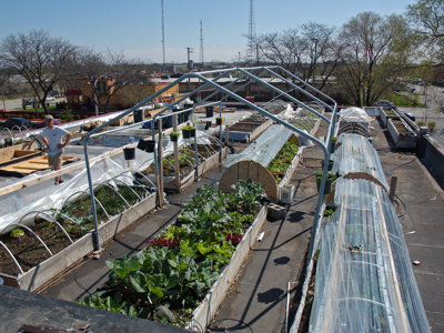 One Milwaukee gardener takes it to the roof