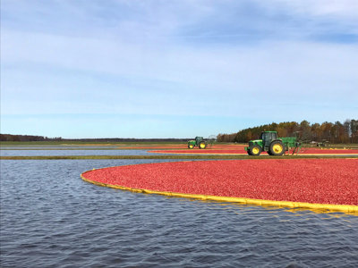 Shift switch: Harvesting Wisconsin cranberries