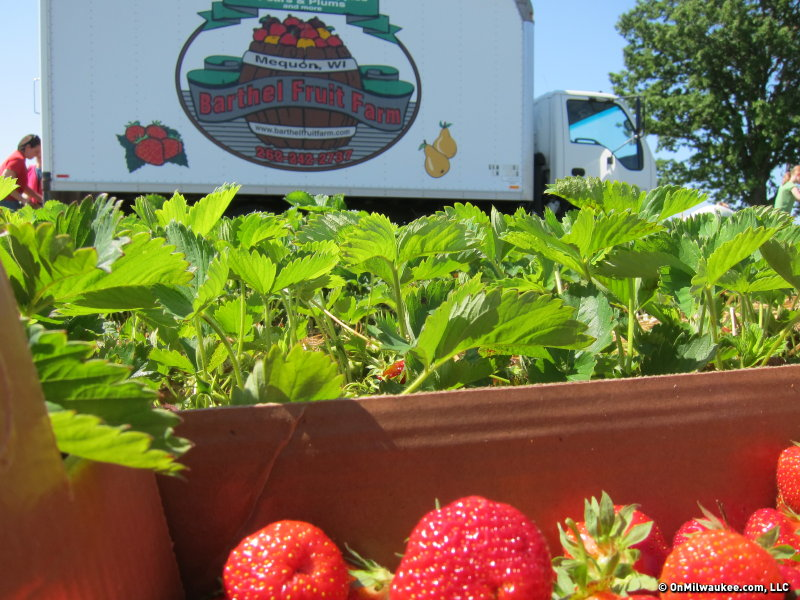 Get to the farm early. Picking starts at 7 a.m.