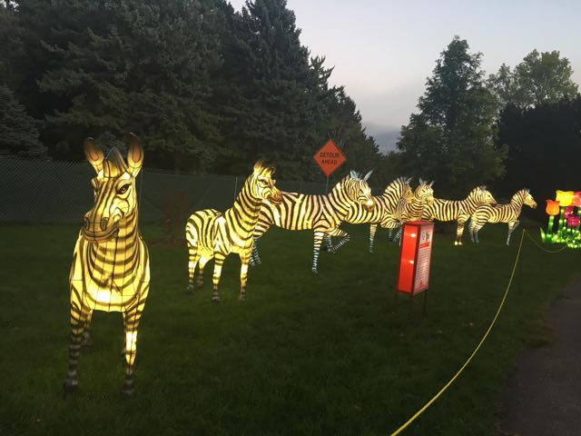 5. Stripeys & First look: 14 photos of China Lights at Boerner Botanical Gardens ... azcodes.com