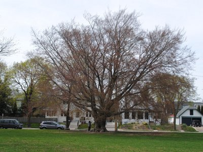 On Arbor Day or any day, Milwaukee's trees keep giving Image