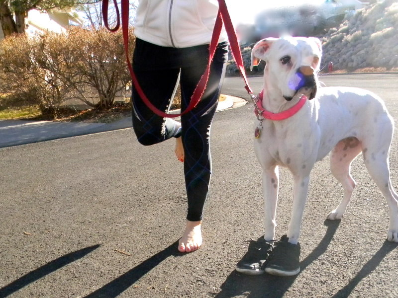 They aren't a perfect fit for four-legged friends, but VIVOBAREFOOT shoes can help transition you into the barefoot running trend.