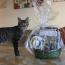 Check out the winning #OnMeowaukee cat photos  Image