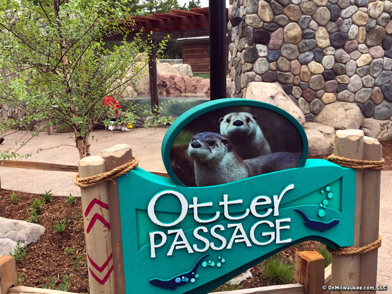 Otter Passage Exhibit Returns Playful Mammals To The Milwaukee