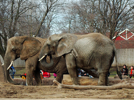Recent warm weather made a Saturday in November ideal for a Zoo visit.